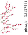 ピンク 花 春のイラスト 38137541
