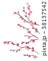 ピンク 花 春のイラスト 38137542