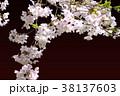 背景素材_桜、フレーム 38137603