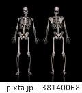 脊柱 脊柱即湾 骨格図のイラスト 38140068