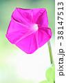 クローズアップ 花 植物の写真 38147513