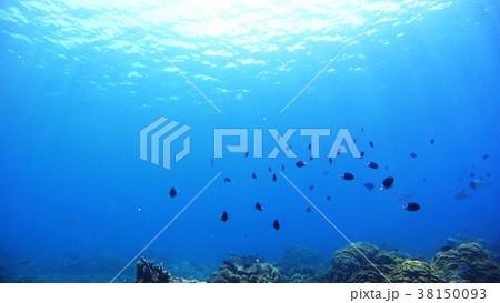 沖縄 阿嘉島の水中写真 38150093