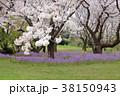 桜 春 花大根の写真 38150943