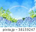紫陽花 38159247