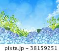 紫陽花 38159251