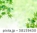 もみじ 38159430