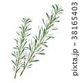 ハーブ ローズマリー 植物のイラスト 38165403