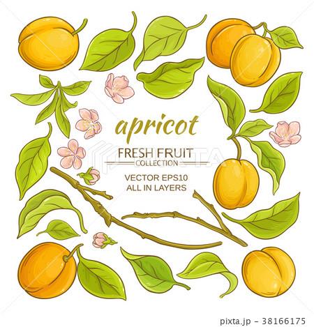 apricot elements set 38166175