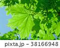 葉 緑樹 草木の写真 38166948