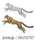 チーター 動物 スケッチのイラスト 38172757