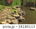 洗足池 岸辺 カモ 38180113