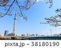 桜 春 東京スカイツリーの写真 38180190