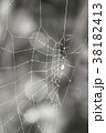 くも クモ スパイダーの写真 38182413