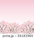 桜 木 背景のイラスト 38183960