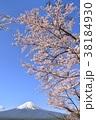 春 桜 富士山の写真 38184930