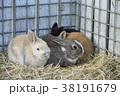 動物 兎 干支の写真 38191679