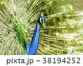 大牟田市動物園 クジャク、 38194252