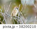 野鳥 雀 鳥の写真 38200210