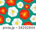 ポピー 花 花柄のイラスト 38202644
