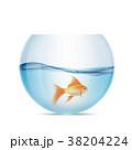きんぎょ キンギョ 金魚のイラスト 38204224