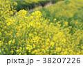 菜の花 春 花の写真 38207226