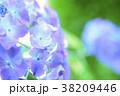 アジサイ 背景 薄紫の写真 38209446