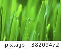 新緑 雫 水滴の写真 38209472