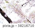 桜 ソメイヨシノ 春の写真 38216710