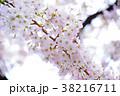 桜 ソメイヨシノ 春の写真 38216711