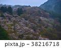山桜 山 風景の写真 38216718