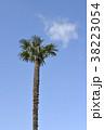 木 青空 棕櫚の写真 38223054