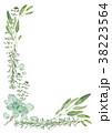 ハーブ 植物 水彩のイラスト 38223564