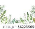 ハーブ 植物 水彩のイラスト 38223565
