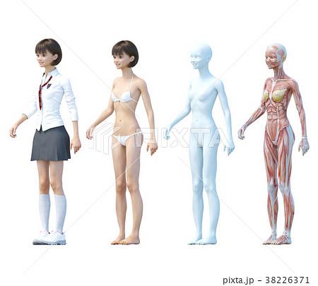 筋肉 女子高生 解剖 図解 ななめ前向き Perming3dcgイラスト素材の