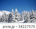 樹氷 38227570