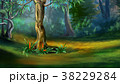 Tree in a Dense Forest in a Summer 38229284