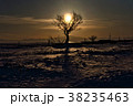 冬の太陽 38235463