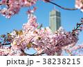 桜 青空 花の写真 38238215