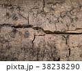 朽ちかけの木の表皮 38238290
