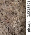 朽ちかけの木の表皮 38238291