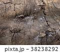 朽ちかけの木の表皮 38238292