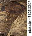 朽ちかけの木の表面 38238297