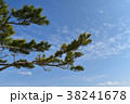 松の枝 38241678