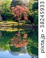 紅葉 森 樹木の写真 38245933