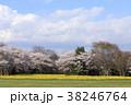 桜 菜の花 春の写真 38246764