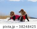 楽しい雪遊び 38248425