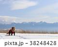 雪景色に犬 38248428