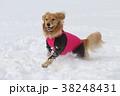 かける犬 38248431