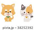 ペット 犬 猫のイラスト 38252392
