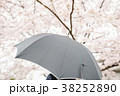 雨 桜 花見の写真 38252890